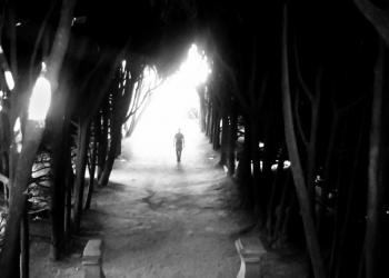 luce-1